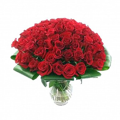 Stunning 100 Roses