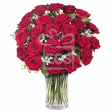 24 Imported Red Roses